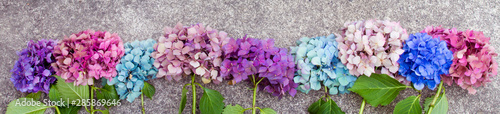 Montage in der Fensternische Hortensie Beautiful hydrangea flowers in multiple colors arranged in a row as a boarder; Bright pink, purple and blue bunches of flowers set in a line