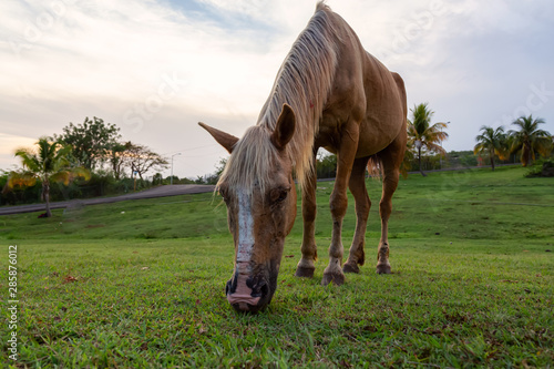 Horse eating green grass in a field during a cloudy sunset Wallpaper Mural