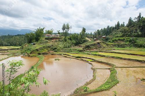 Foto auf Gartenposter Reisfelder Green and brown rice terrace fields in Tana Toraja, South Sulawesi, Indonesia