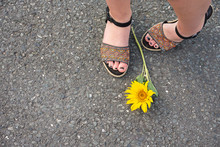 Single Yellow Sunflower Lying At The Feet Of A Woman Wearing Sandals On The Asphalt Of A Road Or Street Viewed From Above In A First Person Point Of View