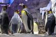 canvas print picture - Penguins in Osaka Aquarium Kaiyukan, Osaka, Japan