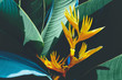 Leinwandbild Motiv beautiful colorful exotic flower on dark leaf background