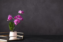 Flowerpot With Blooming Orchid...