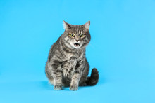 Cute Gray Tabby Cat On Light B...