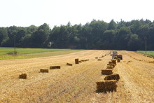 Straw Bales On The Field, Bale...