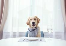Cute Funny Dog Waiting For Foo...
