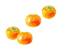 柿の実の水彩イラスト