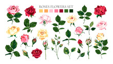 Set Of Pale Pink Red Yellow Ro...