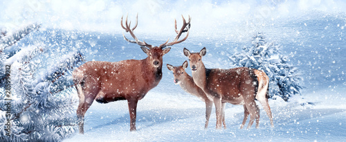 Poster Cerf Family of noble deer in a snowy winter forest. Christmas artistic image. Winter wonderland. Banner format.