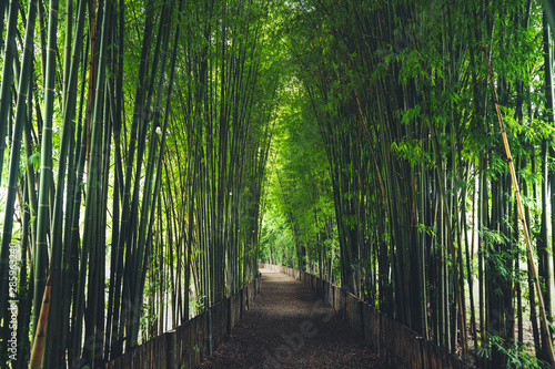 Foto auf Leinwand Bambusse Bamboo The bamboo pathway is a tunnel