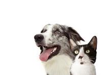 Banner Pets. Side Happy Profil...