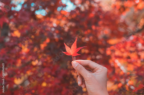 Foto op Aluminium Bomen Young woman traveler looking beautiful autumn leave fall in Japan, Travel lifestyle concept