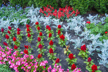 Colorful Flowers Growing In A ...