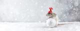 Fototapeta Zwierzęta - Rat in winter hat holding glass ball decoration