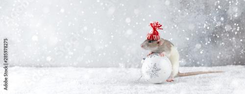 Fotografía Rat in winter hat holding glass ball decoration