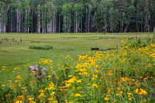 Two Horses Enjoy A Lush Meadow...