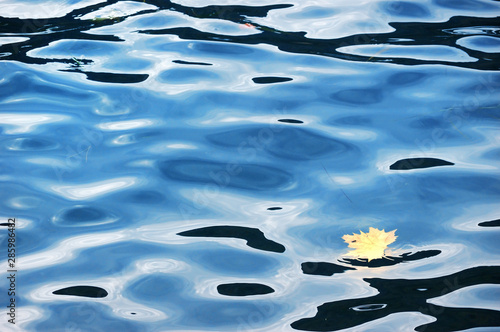 Maple leaf on the water surface #285986482