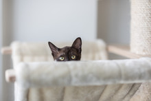 Cute Kitten Playing Hide And Seek