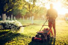 Gardening And Garden Maintainance, Industrial Gardener Using Lawnmower And Cutting Grass In Garden .