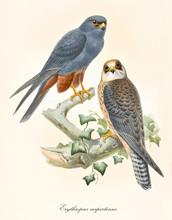 Two Little Birds Of Prey Looki...