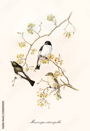Three little cute birds on a single thin branch isolated on white background Canvas Print