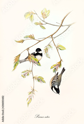 Photo Two little cute birds on a botanical composition with a thin branch with leaves