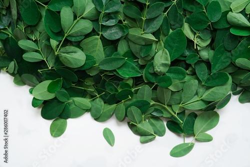 Fresh Moringa or Muringa leaves isolated on white, selective focus