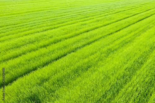Papiers peints Vert chaux Champ de lin vue aérienne oblique à faible altitude