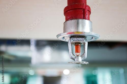 Obraz Fire sprinkler and red pipe. - fototapety do salonu