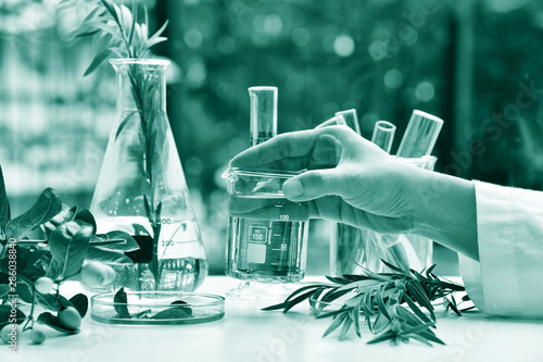 Photo  Medicinal herbal plant analysis, Natural organic botany drug research and development, Scientist hand holding glass beaker with essence, Alternative holistic herb extraction medicine