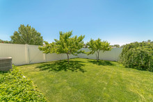Yard Of A Home With Lush Grasses And Small Trees Against Blue Sky On A Sunny Day