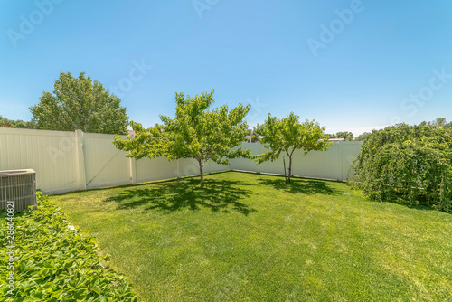 Yard of a home with lush grasses and small trees against blue sky on a sunny day Canvas Print