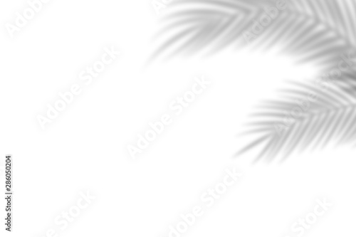 Fototapeta Shadow from palm leaves on a white wall background. White background, cardboard. Abstract image. Tropic concept obraz na płótnie