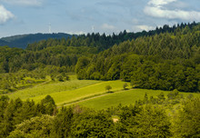 Black Forest Clearing With A T...