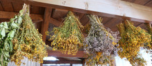 Hanging Bunches