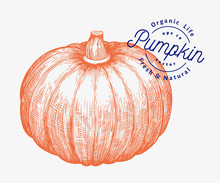 Pumpkin Illustration. Hand Dra...