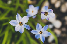 Grass With Tiny Blue Flowers, Close-up Shot