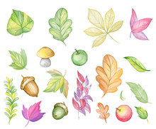 Watercolor Illustration On The Autumn Theme. Figure Autumn Leaves, Apples, Acorns, Mushrooms.