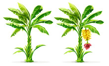 Set Of Banana Palm Tree With Fruits. Exotic Tropical Plants With Green Leaves And Flower, Isolated On White Transparent Background. Eps10 Vector Illustration.