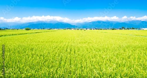 夏から秋へ 安曇野の田園風景