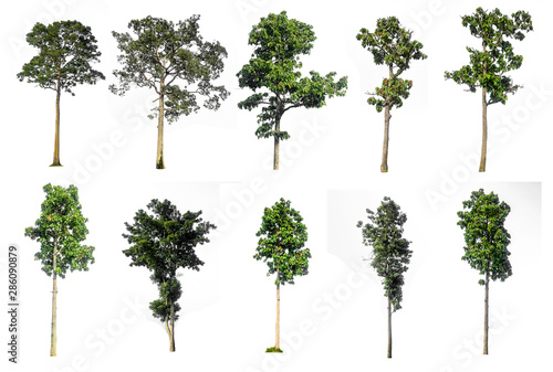 Fotografia, Obraz  Ten collections Tree isolated on white background,clipping paths