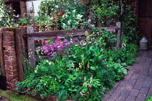 'The Old Gate' Garden Farmhouse Garden With Wild Natural Planting Of Flowers