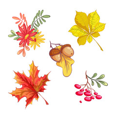 Set of autumn natural elements. Acorns, a red maple leaf, a yellow chestnut leaf, a bouquet of gerberas, a sprig of mountain ash. Vector hand drawing.