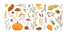 Autumn Set. Collection Of Hand Drawn Fallen Leaves, Vegetables, Berries, Acorns, Forest Mushrooms, Tree Branches Isolated On White Background. Elegant Seasonal Vector Illustration In Realistic Style.