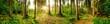 Leinwandbild Motiv Wald Panorama mit heller Sonne, die durch die Bäume scheint
