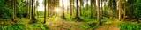 Fototapeta Las - Wald Panorama mit heller Sonne, die durch die Bäume scheint