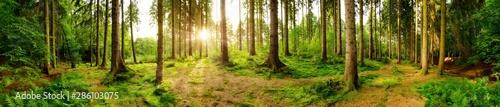 Foto  Wald Panorama mit heller Sonne, die durch die Bäume scheint