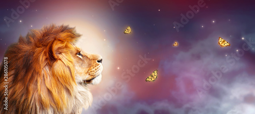 Fototapety, obrazy: African lion and night savannah in Africa. Moonlight landscape with flying butterflies, king of animals. Proud dreaming fantasy lion in savanna looking on stars. Majestic dramatic starry sky banner.