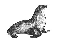 Sea Lion Seal Animal Sketch Engraving Vector Illustration. Scratch Board Style Imitation. Black And White Hand Drawn Image.