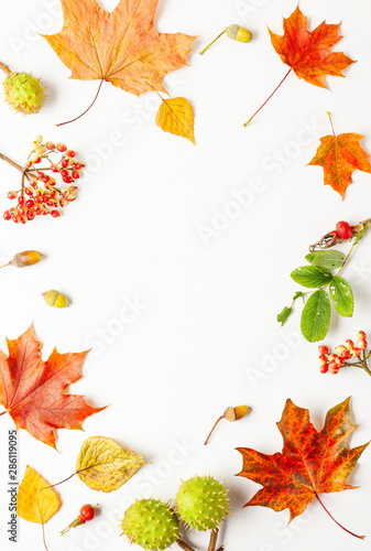 Autumn composition made of leaves, berries on white background. Autumn concept for Thanksgiving day or for other holidays. Flat lay, copy space. - 286119095